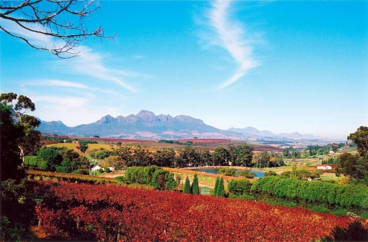 cape-wineland1__large